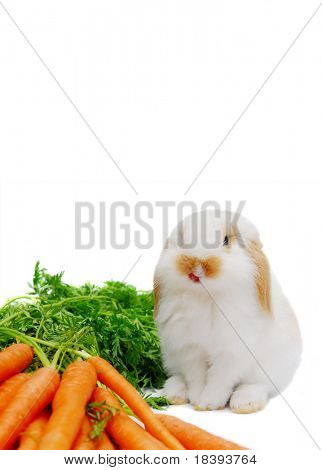 Cute white baby lop ear rabbit with carrots, isolated on white