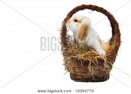 Cute baby easter bunny in a basket filled with hay and easter eggs, isolated on white