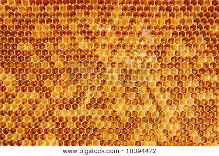 Fundo com células dourados de um favo de mel