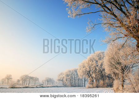 Dutch winter landscape with frozen trees and clear blue sky at dawn with copy-space