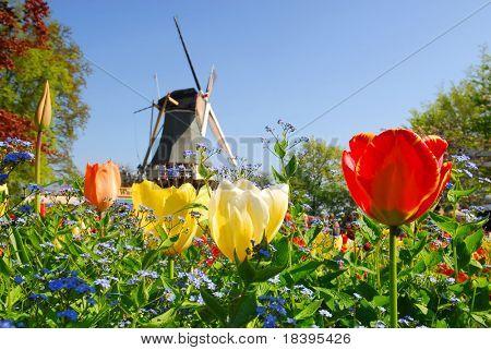 """Holländische Windmühle und bunten Tulpen und Vergissmeinnicht Blumen in berühmten Frühling Garten """"Keukenhof"""", Ho"""