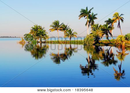 Palm trees with reflection in the water in Zapata swamp area on caribbean island Cuba