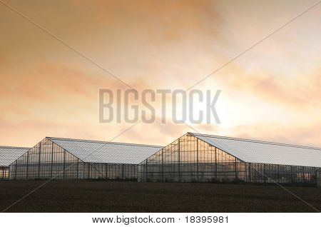 Greenhouses at sunrise in Denmark, Europe
