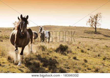 Stock horses on an Australian cattle station at sunrise
