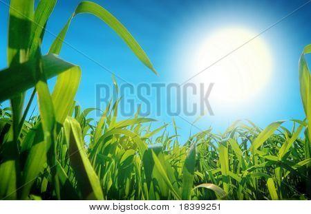grama e sol