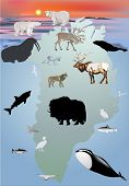 foto of polar bears  - illustration with Greenland animals collection - JPG