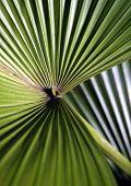 stock photo of arborist  - The geometric patterns of a Florida palmetto - JPG