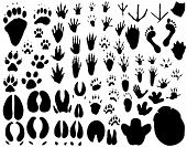 image of bear tracks  - Collection of vector outlines of animal foot prints - JPG