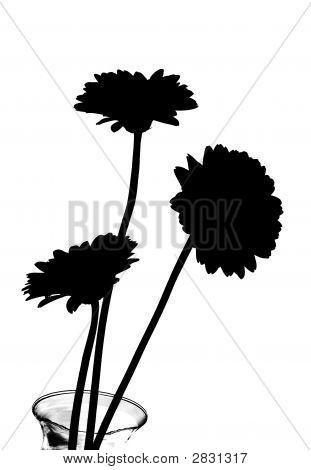 Daisy Flowers In Silhouette