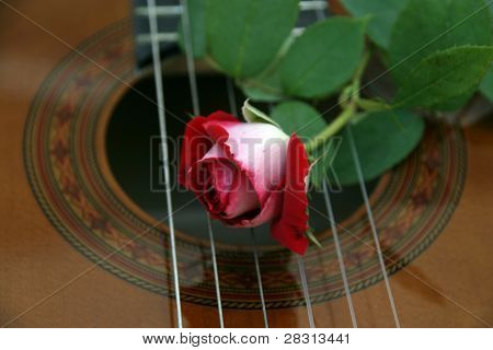 guitar and rose