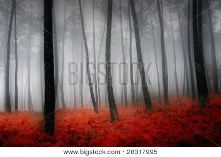 nice and cold autumn landscape
