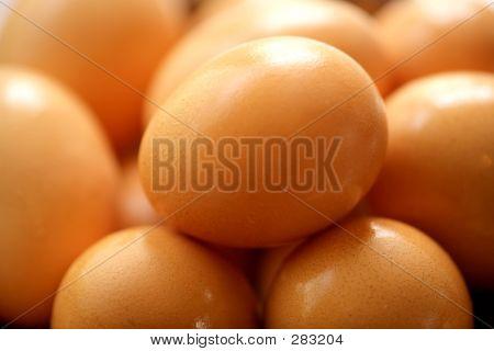Fresh Eggs T
