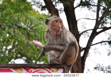 Monkey Eating Ice Cream