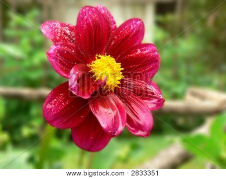 Lovely Flower