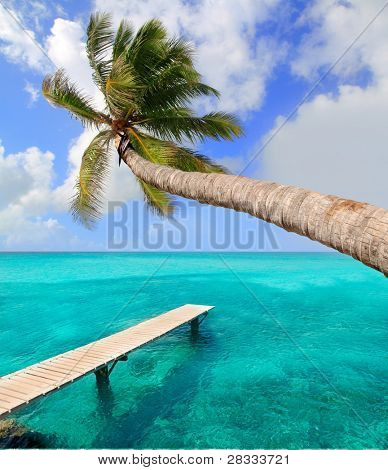 Palm tree in tropical perfect beach at Balearic islands [ photo-illustration]