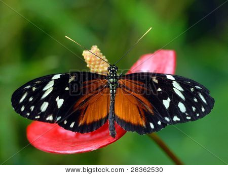 Butterfly feeding on colorful flowers from above