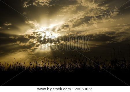 Cloudy sunrise in golden tones with vegetation
