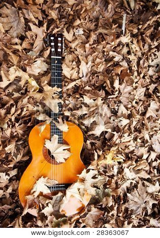 Spanish guitar bury between fall leaves