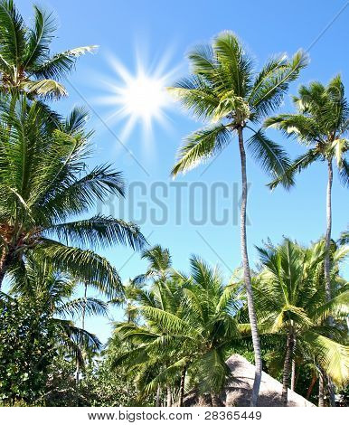 Sunny Day In The Tropics