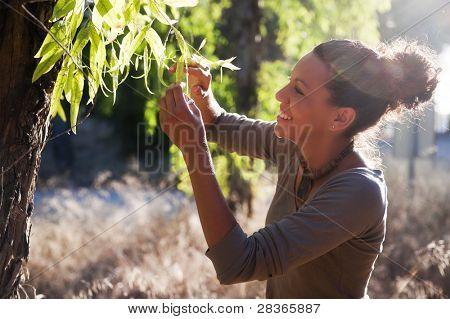 Young biologist examin eucalyptus leaf.