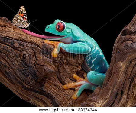 Frog Trying To Catch Butterfly