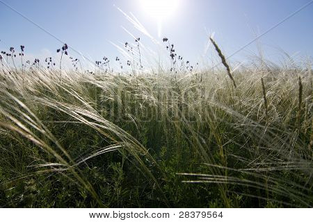 Steppe In Donbass