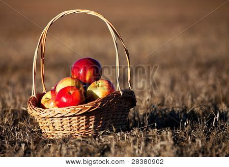 Healthy Organic Apples in a Basket