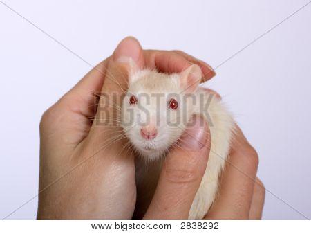 In Hands