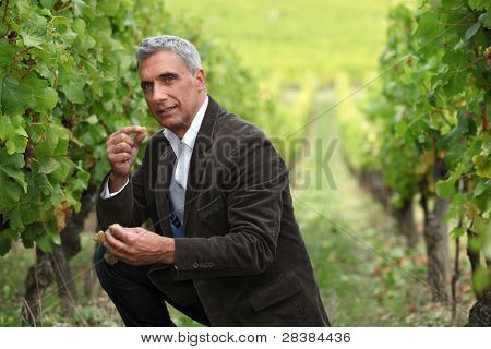 vineyard owner