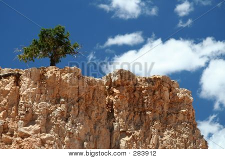 Lonely Tree On Mountain Top