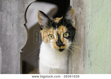 Calico Cat Staring Through Fence