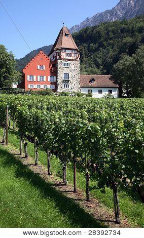 Liechtenstein vineyard