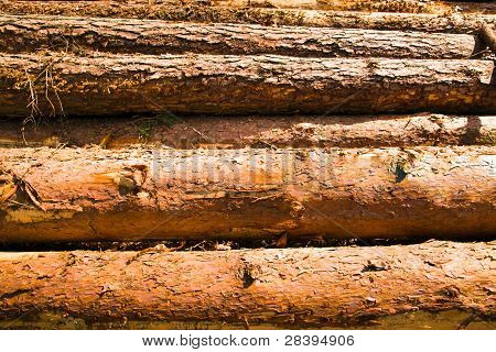 combined logs