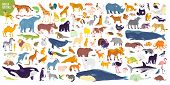 Big Vector Set Of Different World Wild Animals, Mammals, Fish, Reptiles And Birds. Rare Animals. Fun poster