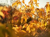 Close Up View On Tree Branch With Yellow Leaves In Autumn Forest. Fall Foliage. Colorful Nature Back poster