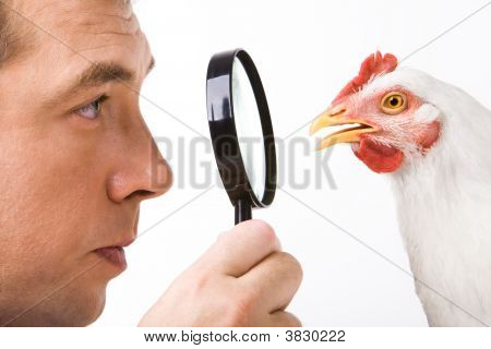 Man And Hen