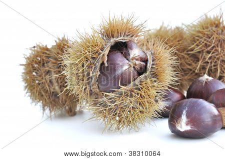 Chesnuts In Husk