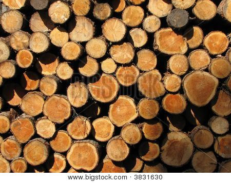 Winter Wood Pile