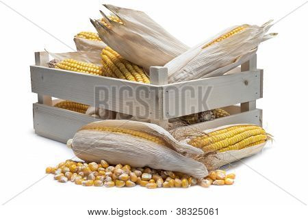 Wooden Crate With Corn Ears