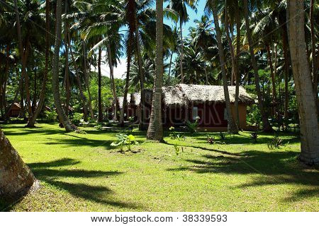 Tropical Palm Garden In Beautiful Paradise