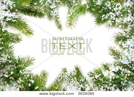 Pine Branches With Snow On White