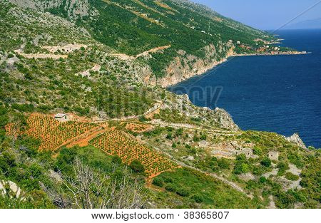 Vineyards southern coast of Hvar island west of Sveta Nedjelja Croatia