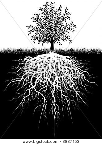 Raízes de árvores