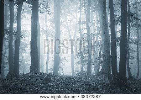 Light coming trough trees in a forest with fog
