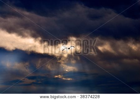 evening sky with the sea gull