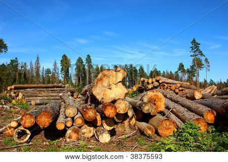 Harvesting of wood