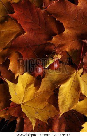 Blätter und Kastanien. Textur