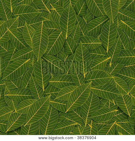 Yellow Green Transparent Leaf Pattern