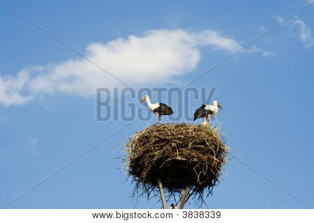 Storks In A Nest