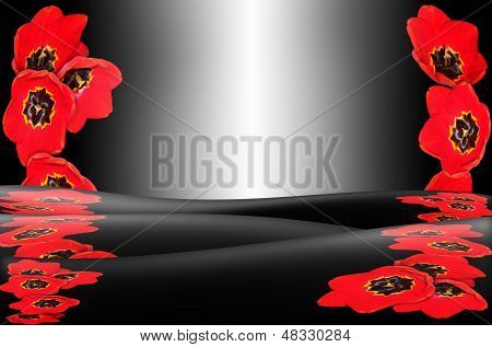 monochrome background with red tulip